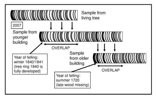 Dendrochronology How Tree-Ring Dating Reveals Human Roots